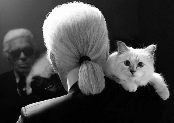 choupette_on_Karl_Lagerfeld