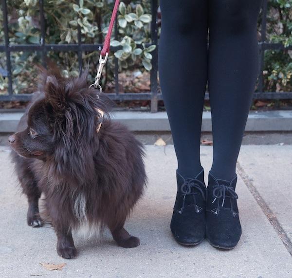 Fashion Blogger Cute Puppy