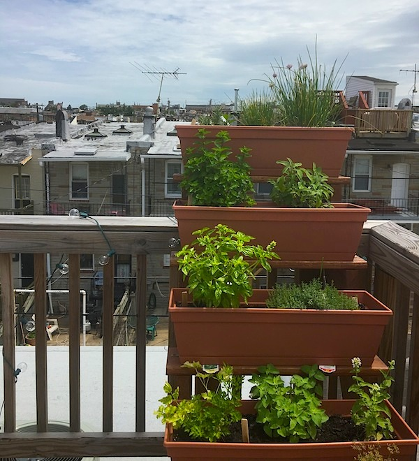 Roof Garden Baltimore